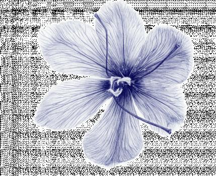 Concours_bloem2_blue.png