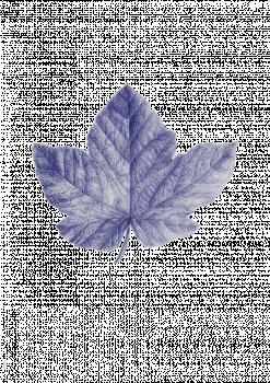 druivenblad.png
